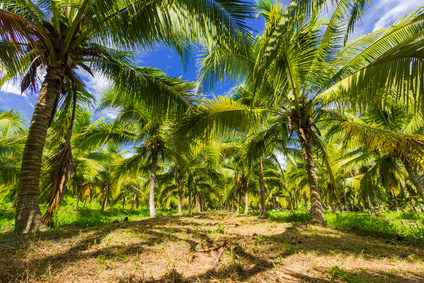 Discover agricultural investing in coconut farmland in Brazil